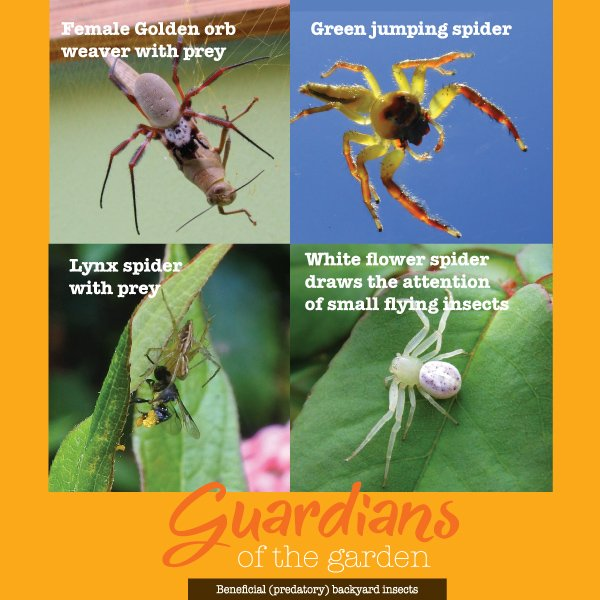 Guardians of the garden - Beneficial (predatory) backyard insect