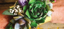 Botanical Artist – Australian Artist Profile – Roz Borg
