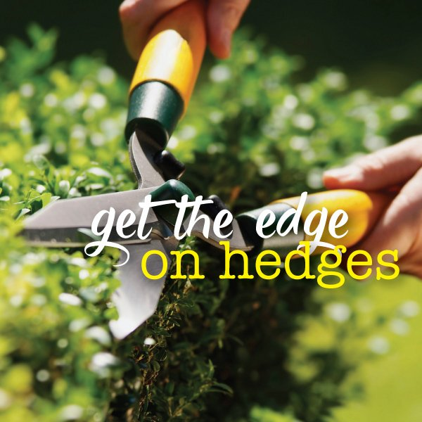 Modern plants for hedges and screening #aboutthegardenmagazine.i