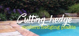 Modern, fast growing plants for hedges and screening