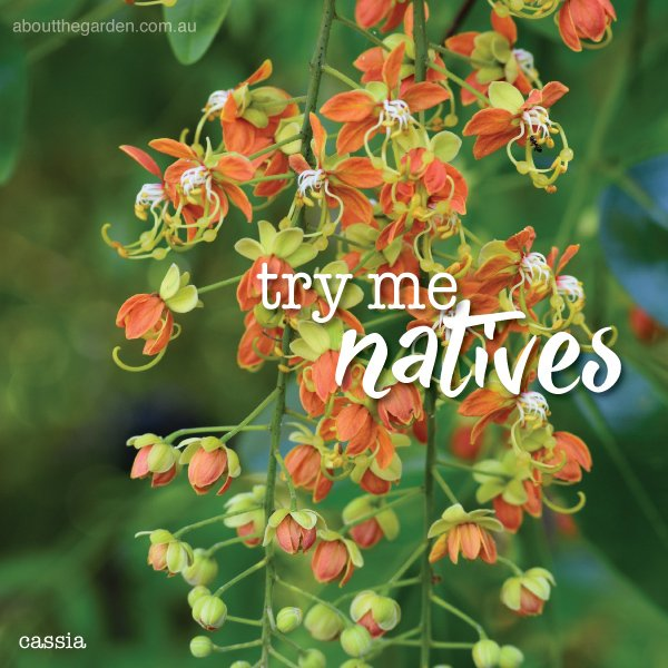 Australian Natives with a difference Australia #aboutthegardenma
