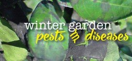 Common winter garden pests and diseases in Australia