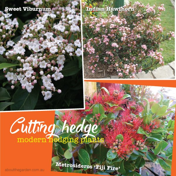 Modern Fast Growing Plants For Hedges And Screening About The Garden Magazine