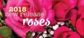 2018 New release roses by Treloar Roses