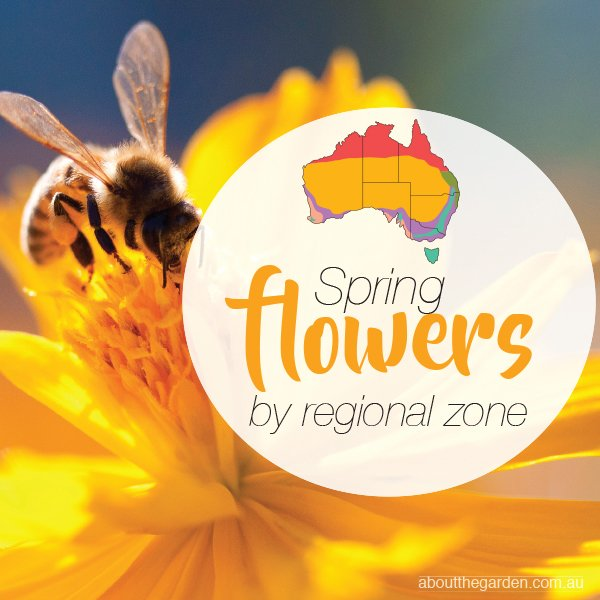 Spring Flowers Planting Guide By Temperate Regional Zones What To