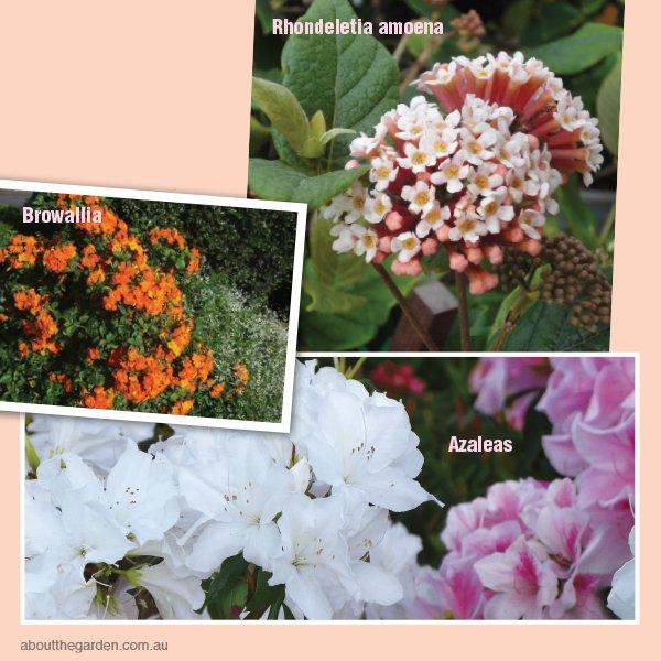 Spring flowering plants for gardens Australia #aboutthegardenmag