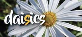 The types of daisies