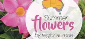 Summer flower planting guide by regional zones Australia
