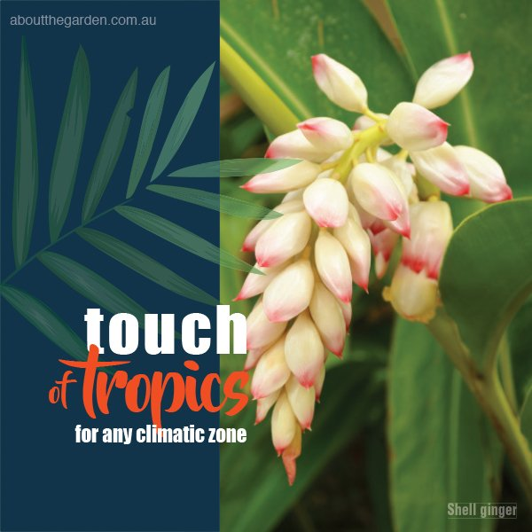Tropical Plants for any climate #aboutthegardenmagazine.indd