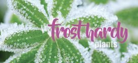 Frost hardy plants and gardening tips
