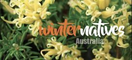 Winter Australian Natives