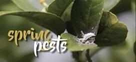 Spring Garden Pests in Australia