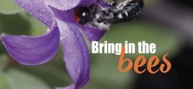 Bring in the bees to your garden – Native plants for native bees