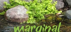 Growing marginal aquatic plants
